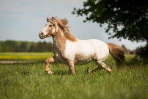 Ponyhof Birmes-7HP